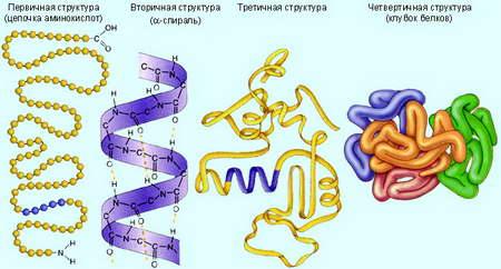 Процесс синтеза белка